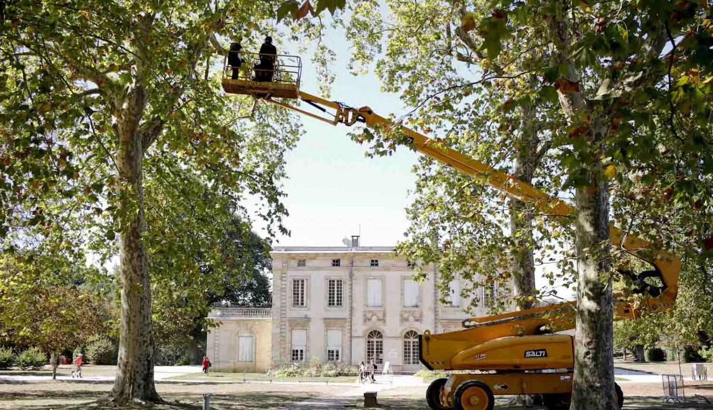 Les arbres dans la ville : un bien commun précieux, à surveiller, entretenir, à développer...